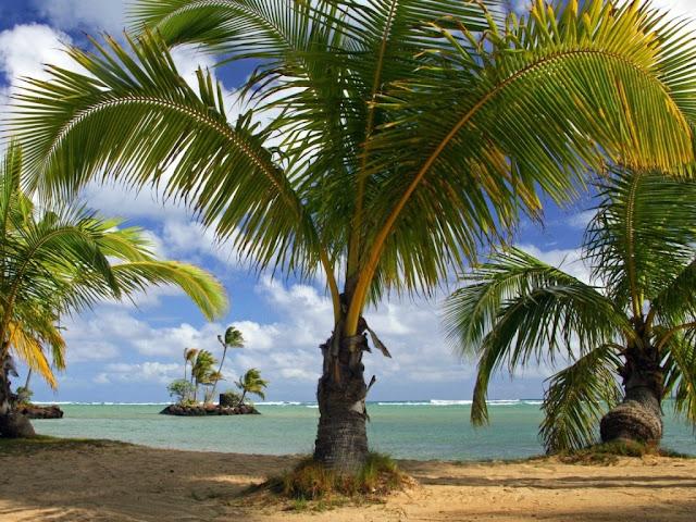 besplatne pozadine za desktop 1024x768 free download plaža ljeto more