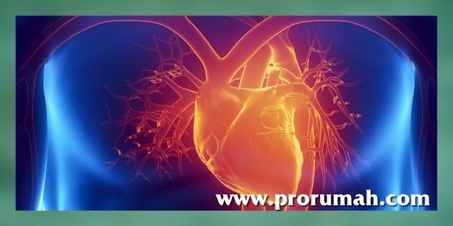 khasiat daun bidara - meningkatkan kesehatan jantung