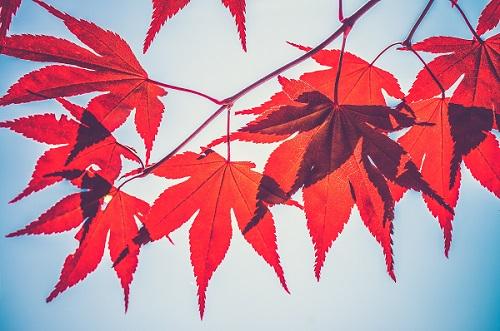 Consejos-para-hacer-fotografías-en-otoño