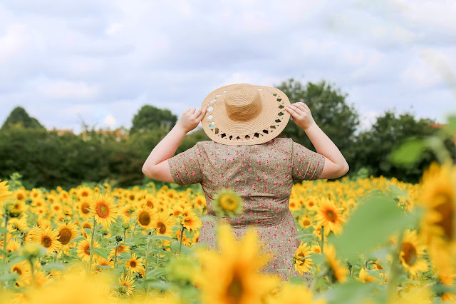 Sunflower Fields Portrait in Radstock