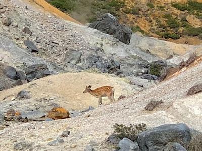 地獄谷の鹿
