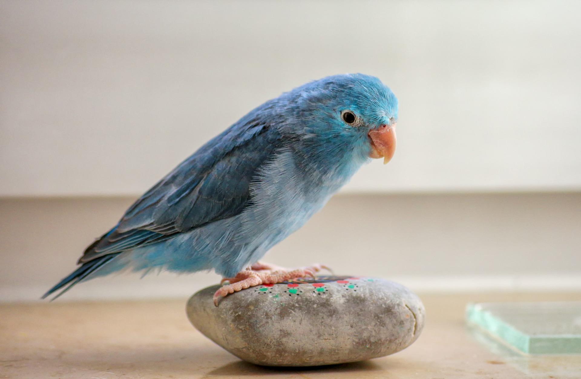 How to encourage wild birds into your garden