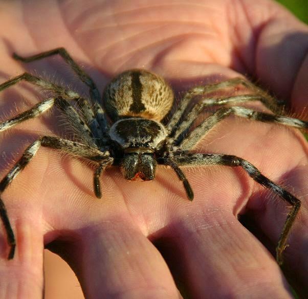 Ρόδος: Πέθανε από τσίμπημα αράχνης – Έδινε μάχη για δύο εβδομάδες