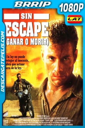 GANAR O MORIR (1993) BRRIP 1080P LATINO – INGLES