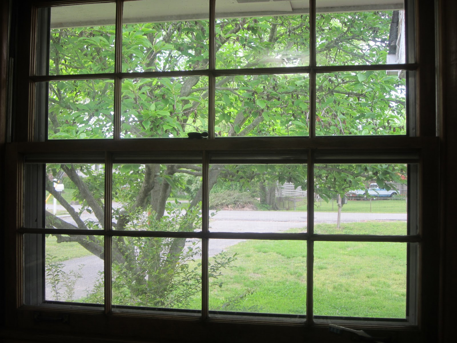 Kathleen T Jaeger How Looking Outside My Kitchen Window Taught Me