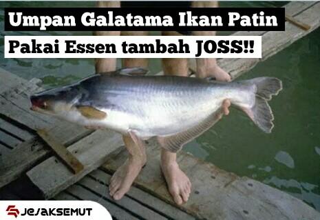 Anti Zonk Resep Umpan Ikan Patin Galatama Siang Malam Jejaksemut