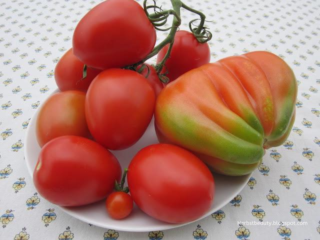 Tomatenvielfalt von meinem Balkon