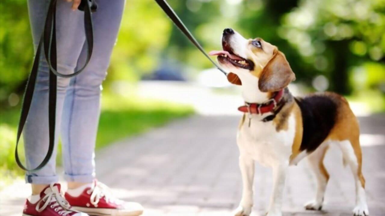 rover-vale-la-pena-pasear-perros-para-ganar-dinero