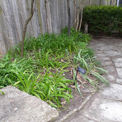 Toronto 2020 Back Garden Spring Cleanup After in Riverdale by Paul Jung Gardening Services