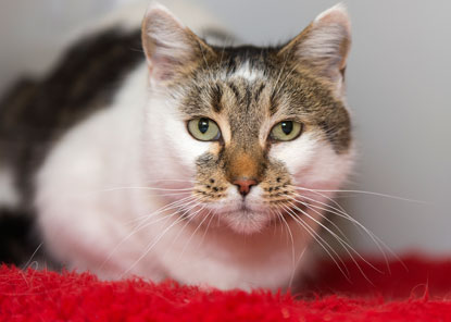 Cat reunited with owner after microchip scan