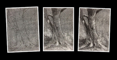 Step by step charcoal study sketch of a tree trunk by Manju Panchal