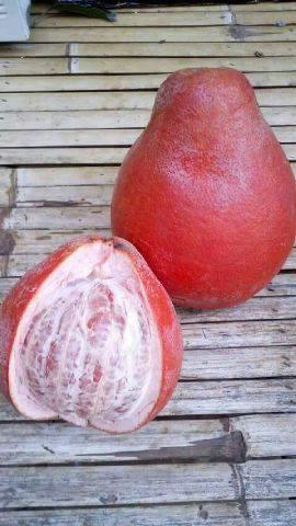 Khasiat Red Pomelo Fruit