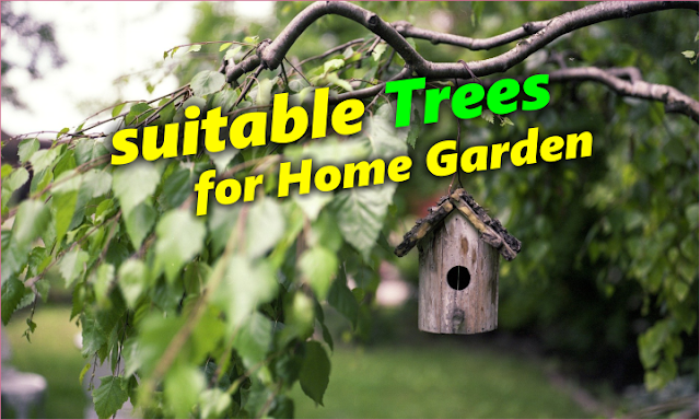What are the 3 types of trees to plant in your villa garden ?