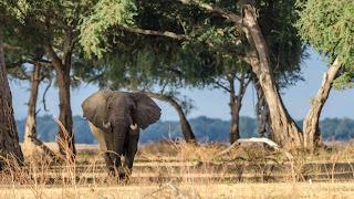 Elephant of manas national park