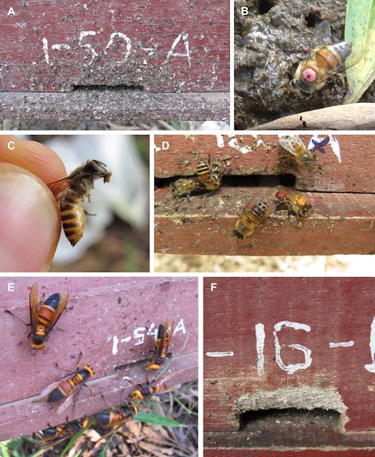 Zdjęcia owadów z badania