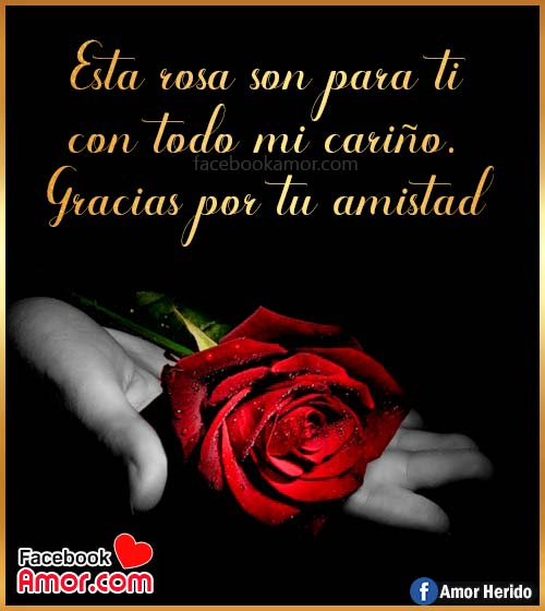 rosa roja de amistad