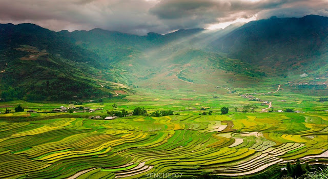 Mu Cang Chai in the summer