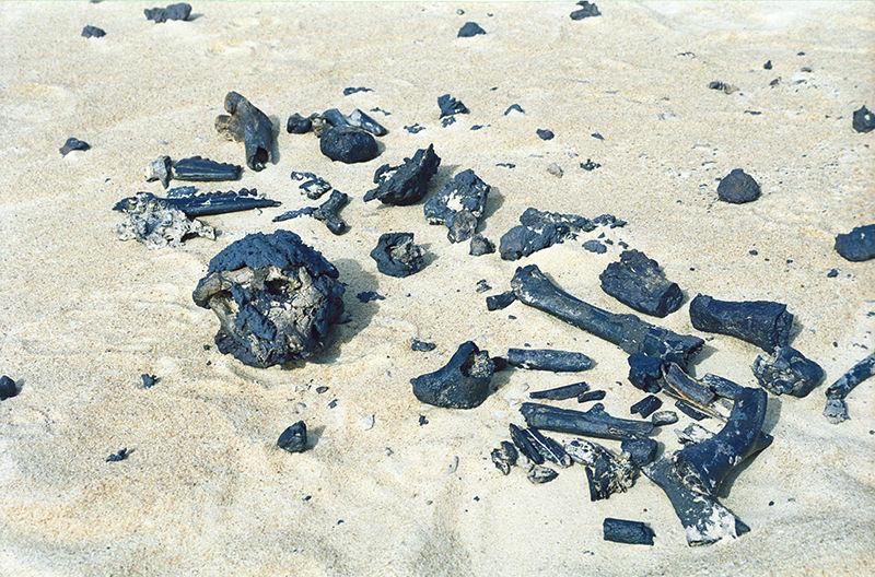 Restos fósiles de Sahelanthropus tchadensis fotografiados tras su hallazgo en 2001. Foto: Alain Beauvilain