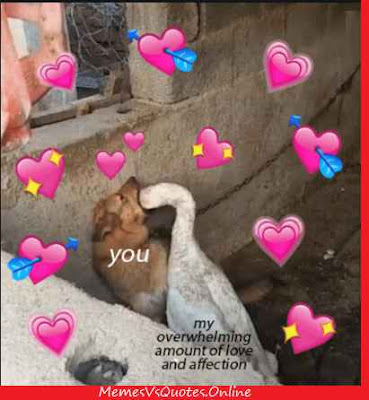 Love And Affection Memes