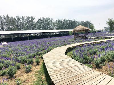 Destinasi Romantic, Wisata Halal Beijing