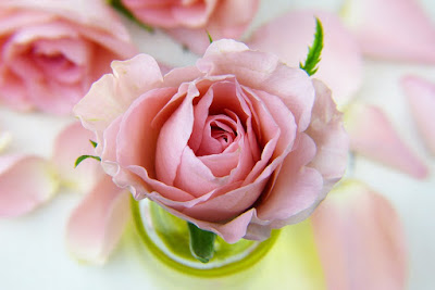 Bunga Mawar Lambang Cinta Yang Sangat Berkhasiat Media Ilmu