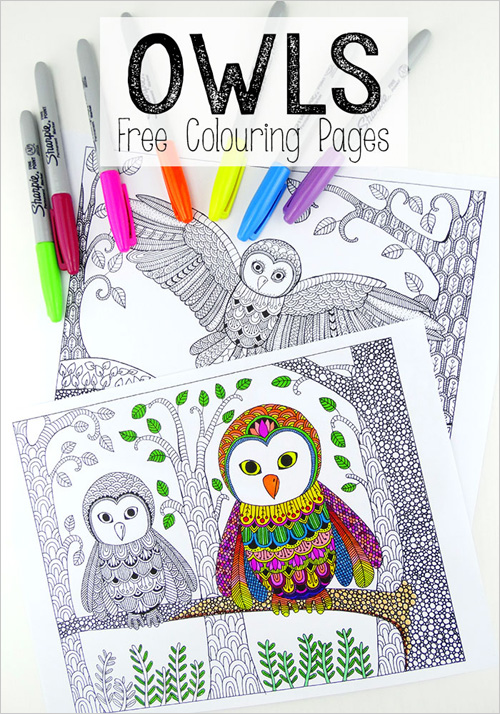 Barn Owl coloring page - Animals Town - animals color sheet - Barn ... | 714x500