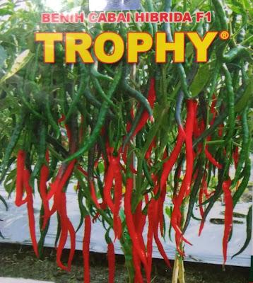 Benih Cabai Kriting Hibrida F1 Merek Trophy