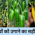 सब्जियों को लगाने का सही समय और तरीका