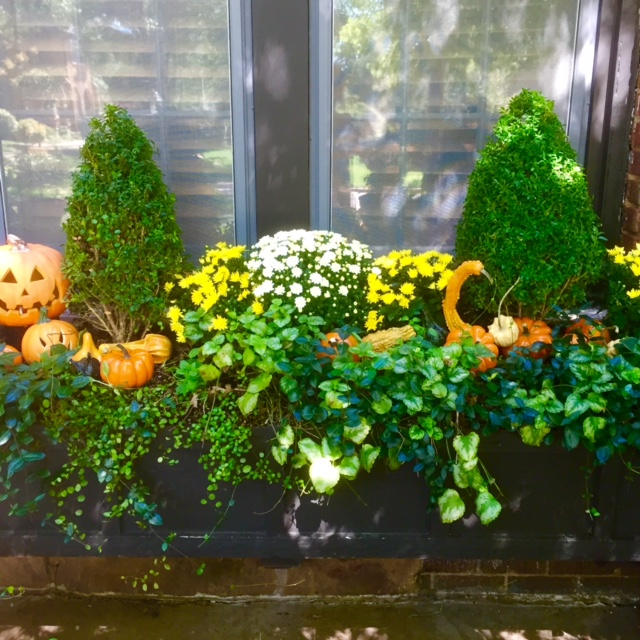 A straight on view, clearly showing the layers of plantings...thrillers, fillers, and spillers...topped off with decorative gourds and pumpkins.