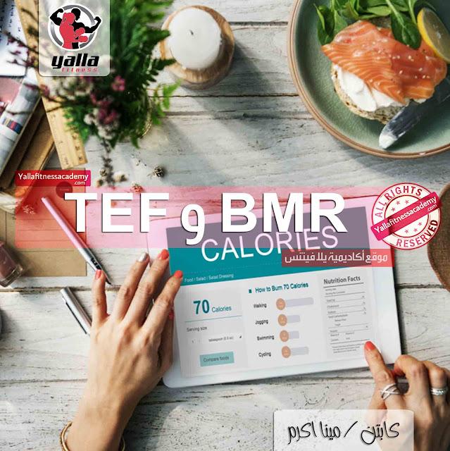 الطاقة بالغذاء | الطاقة اللازمة للجسم | BMR | TEF
