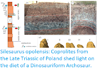 https://sciencythoughts.blogspot.com/2019/04/silesaurus-opolensis-coprolites-from.html