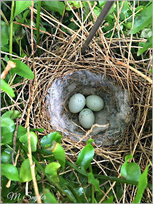 May 28, 2019 Noticing our House Wrens have nested again in our fern.
