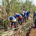 Agro| Setor sucroalcooleiro fecha safra positiva em Mato Grosso