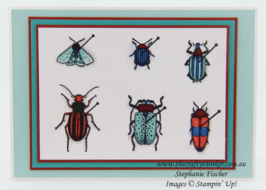 Beetles & Bugs, Boy's card, www.thecraftythinker.com.au, #thecraftythinker, Stampin Up Australia Demonstrator, Stephanie Fischer, Sydney NSW