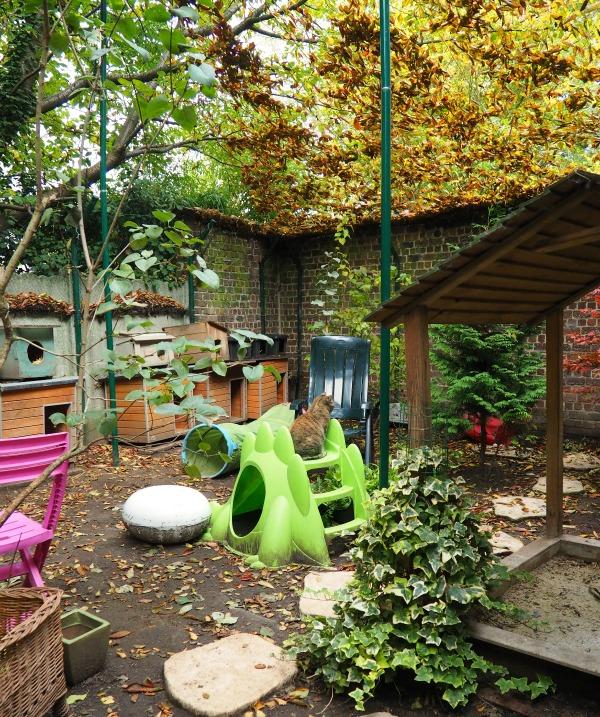 cat shelter woluwe-st-lambert