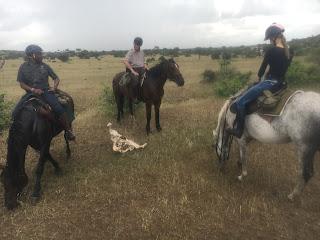 Botswana, ratsastusmatka, ratsastussafari, Riitta Reissaa, Horsexplore