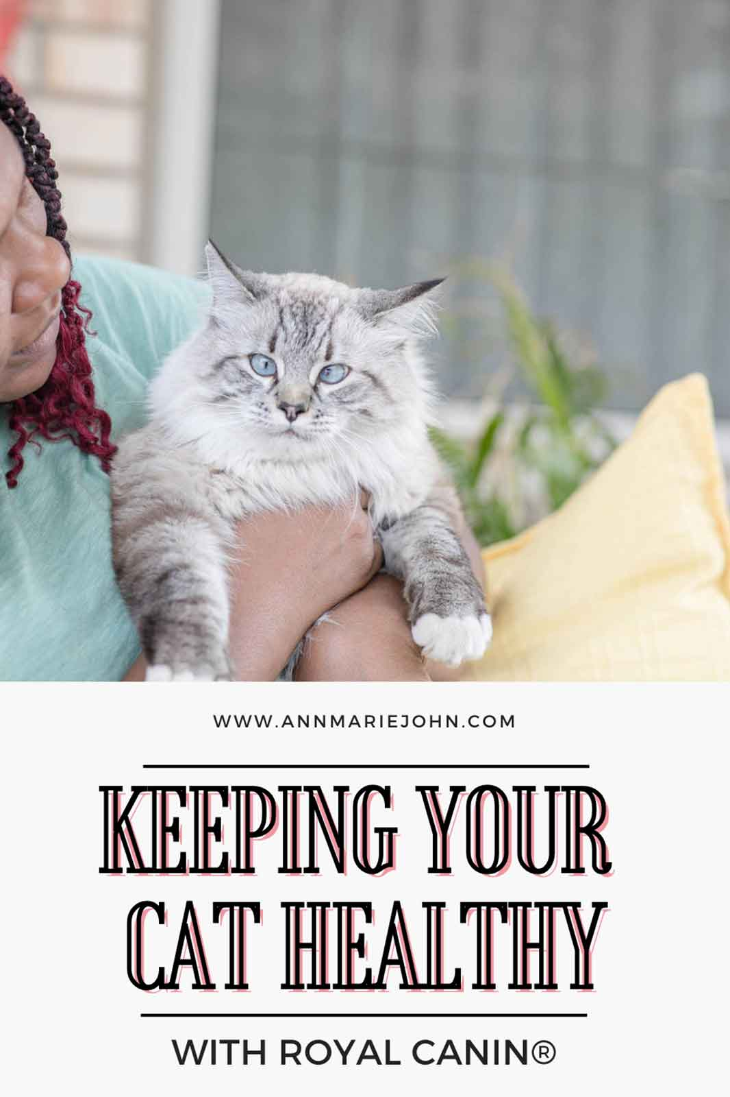 Keeping Your Cat Healthy During National Take Your Cat to the Vet Month.