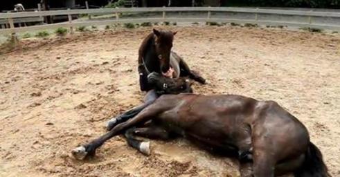 Quand le cheval se penche vers cette femme, ce qu'il se passe entre eux est intensément beau. J'en ai des frissons!