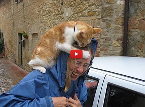 Коты нападают на людей и окузываются сильнее