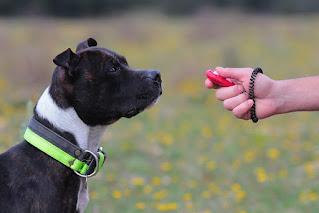 Consejos para tener una sesión de entrenamiento de perros exitosa