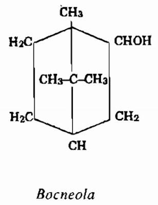 Thành phần hóa học Đại Bi (Long não hương) - Blumea balsamifera - Nguyên liệu làm thuốc Chữa Cảm Sốt