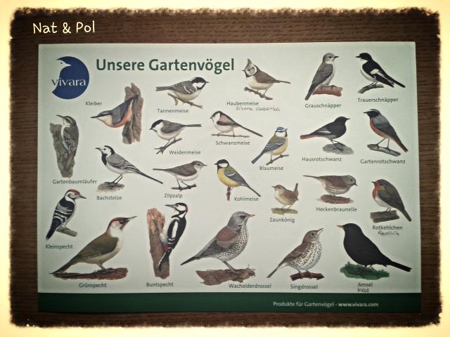 ptaki po niemiecku