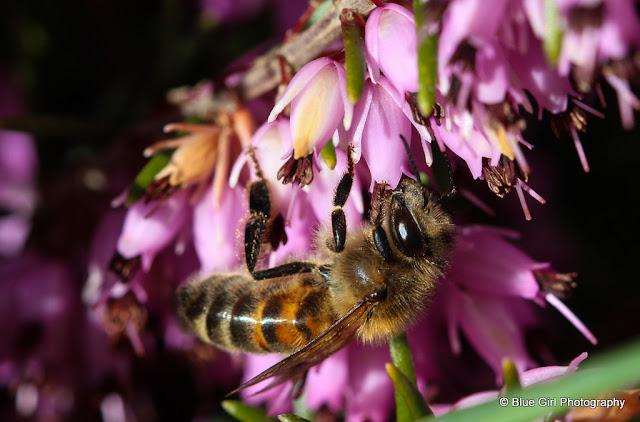 Πωλούνται 60 δοχεία μέλι σουσούρα στην Χαλκιδική