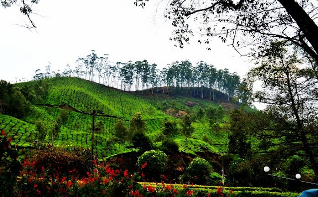 Blossom Park Munnar, Best Places to Visit in Munnar