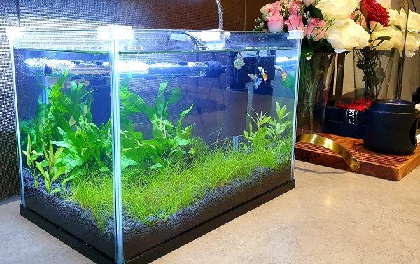 Guppy tank with filter, heater, no CO2, & no ferts