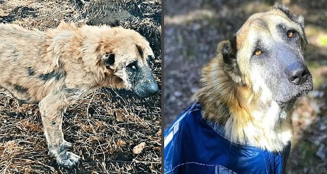 Разводчики довели собаку до истощения и выбросили. Волонтеры успели ее спасти
