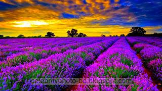 Beautiful%2BNatural%2Bhd%2BFlaowar%2BWallpaper025