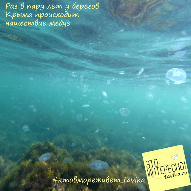 нашествие медуз Крым