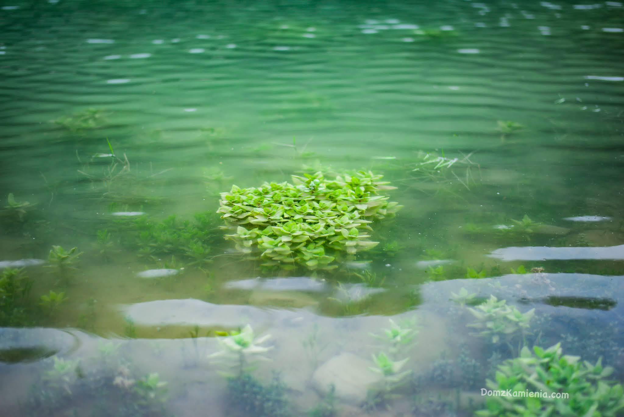 Lago di Bracanello - Dom z Kamienia blog