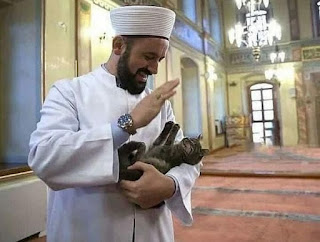 Una mezquita para gatos